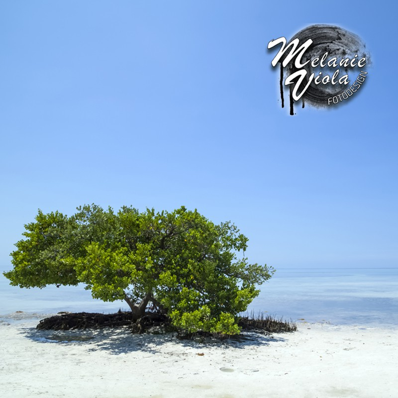 LINK - OhMyPrints Onlineshop - FLORIDA KEYS Einsamer Baum